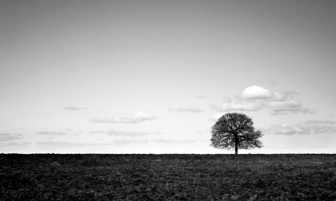 636048222415666886-122122018_lone-tree-landscape-isolation-black-and-white-photography-edward-prince